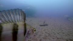 Underwater Perch Fishing Arkistovideo