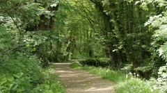 Walk trail leading somewhere through forest natural background 4K 3840X2160 U Stock Footage