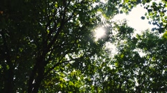 HD of Sunlight through trees Stock Footage
