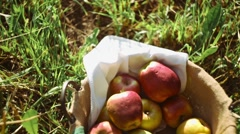 Apples in the basket, autumn apples, fruits for picnic, gifts of autumn Stock Footage