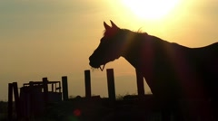 Horse silhouette in sunset sun Stock Footage