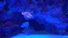 Strange fish in aquarium Stock Footage