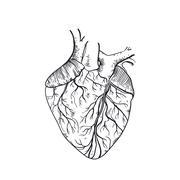 Vector hand drawn anatomic human heart Stock Illustration