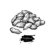Cardamom seed heap vector hand drawn illustration. Isolated spic Stock Illustration