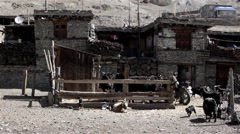 Poor ancient asian shacks with goat farmyard Stock Footage