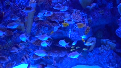 Variety of fish against corals Stock Footage