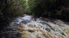 Tautuku river high level after heavy rain, Catlins, New Zealand Stock Footage