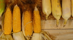 Fresh corn from farm Stock Footage