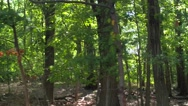 Exploring in the woods Stock Footage