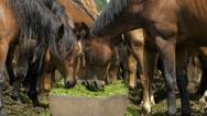 Herd of horses in the russian prairie Stock Footage