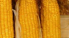 Fresh corn  Stock Footage