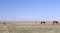 Pasture in the steppe Stock Footage