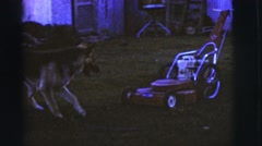 1968: man smokes pushing lawn mower as dog follows it back and forth. Stock Footage