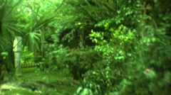 1973: park having rich greenery of trees and bushes and amazing ambiance MEXICO Stock Footage