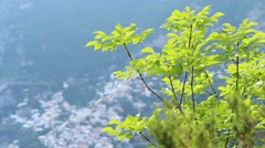 Greenery with Positano, Italy in the background Stock Footage