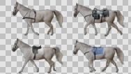 White horse is harnessed and saddled walking. Stock Footage