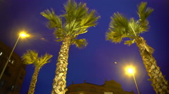 Tall palm trees against night sky background, stormy weather at exotic resort Stock Footage