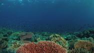 4k Edge of a coral reef with plenty fish Stock Footage