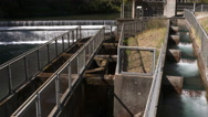 Fishladder, Fish Ladder Stock Footage