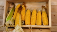 Fresh corn on the rain tree wood Stock Footage