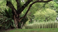 Jungle Forest in Botanic Gardens, Singapore Stock Footage