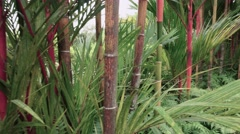 Bamboo Forest in Tropical Singapore Stock Footage