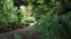 Pathway in Forest Stock Footage
