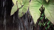 Waterfall and Leaves Stock Footage