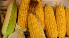 Put corn cob in the box Stock Footage