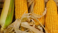 Corn without cover Stock Footage