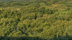 Aerial view of trees Stock Footage