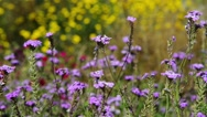 Meadow flowers on a blurred background Stock Footage