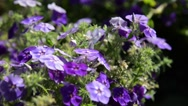 Flowers in the garden on a blurred background Stock Footage