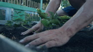 Man plants in home garden in slow motion close up Stock Footage