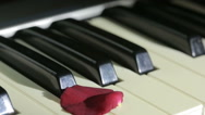 Petals of rose on piano keys. wind blows away the rose petals Stock Footage