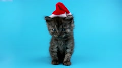 Lovely smiling Christmas kitten wear Santa hat Stock Footage