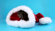 Little kitten get out from red Santa Claus hat Stock Footage