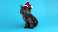 Christmas kitten meows Stock Footage