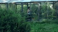 Farmer Hand Picking Ripe Tomato in Vegetable Garden Stock Footage