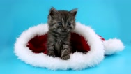 Christmas Cat looking around and up, sitting in red Santa Claus cap Stock Footage