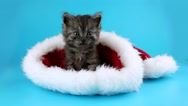 Little gray cat relaxing in the red Santa Claus hat Stock Footage