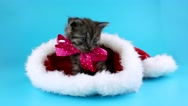 Cute little kitten with pink bow in the red Santa Claus hat, happy New Year Stock Footage