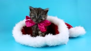 New Year gift, cute little kitten with pink bow in the red Santa Claus hat Stock Footage