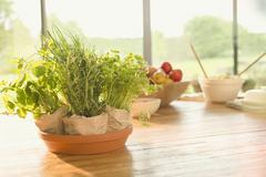 Fresh potted herbs on dining table Stock Photos
