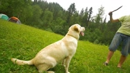Labrador catch the stick Stock Footage