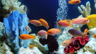 Shoal of yellow vivid fish swim among coral reef Stock Footage