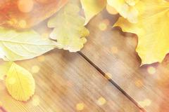 Close up of many different fallen autumn leaves Stock Photos