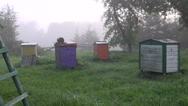 Apiary in early morning Stock Footage