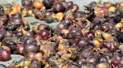 Harvest onions drying in sun Stock Footage