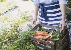 Woman harvesting fresh carrots and vegetables in garden Stock Photos